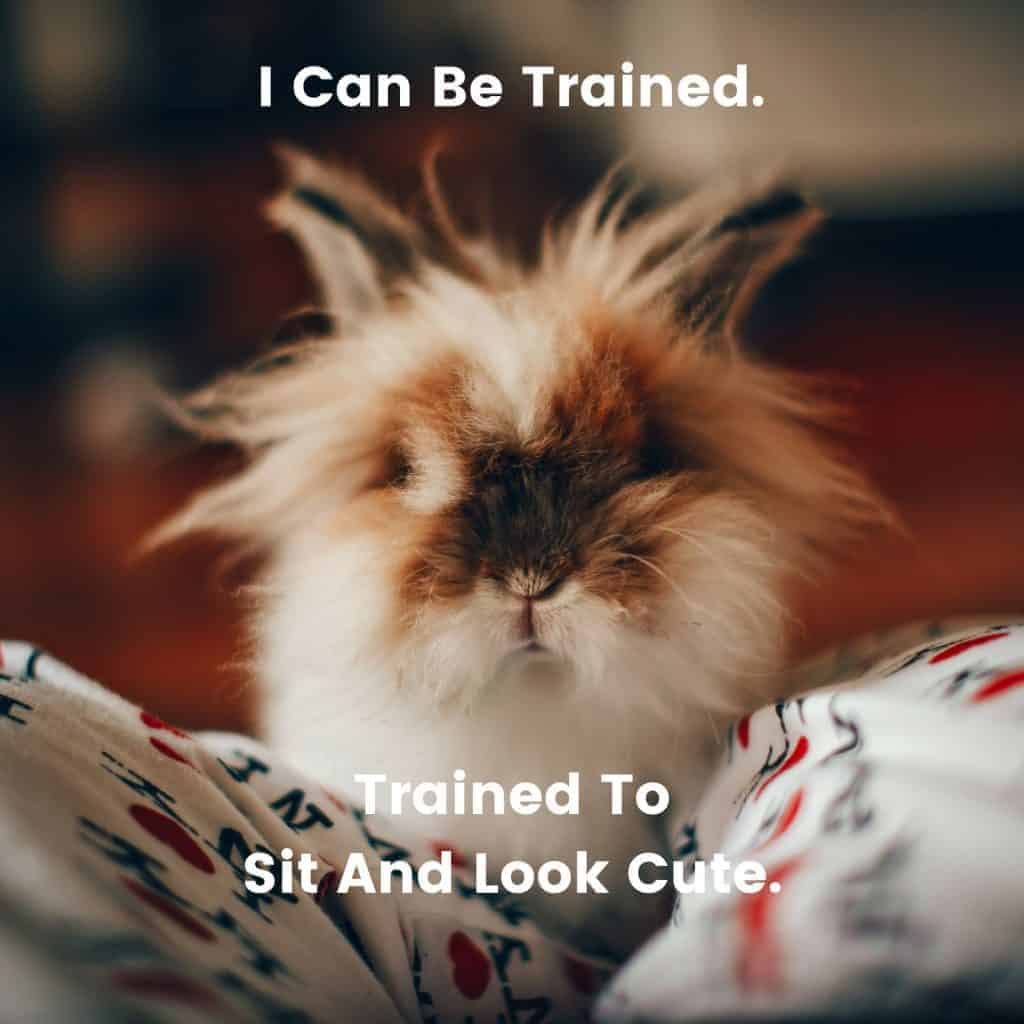 Fluffy Rabbit With Quote