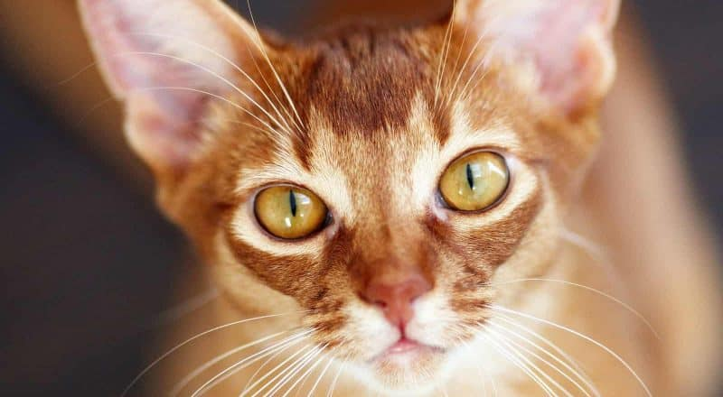 500 Orange Cat Names - The only list you'll need to find the perfect