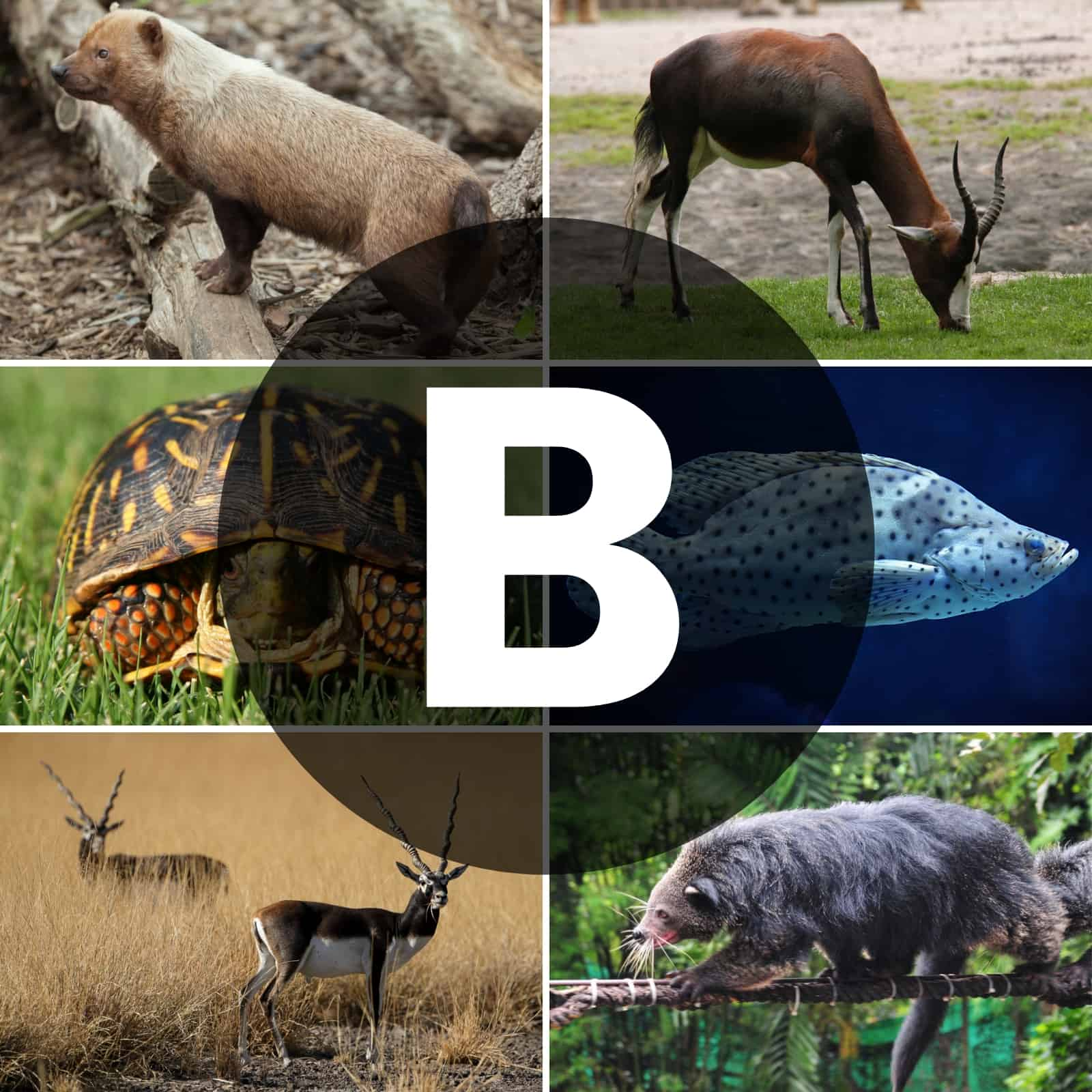 70 Animals That Start With B The Only List You Ll Need