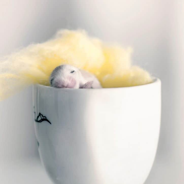 Baby Hamster In Cup
