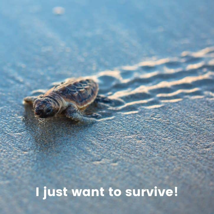 I just want to survive!