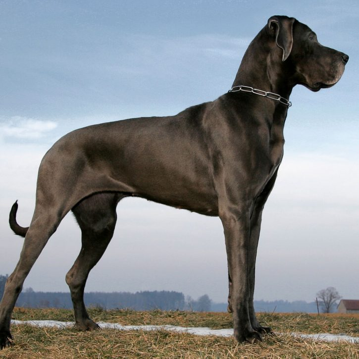 Small names for big dogs.