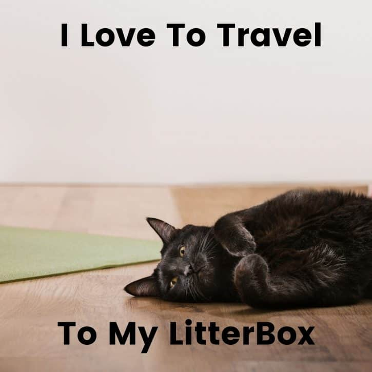 I love to travel, to my litter box.