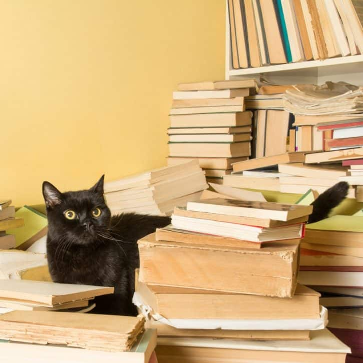 Black Cat Surrounded By Books