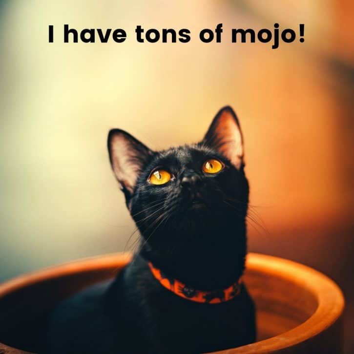 I have tons of mojo!