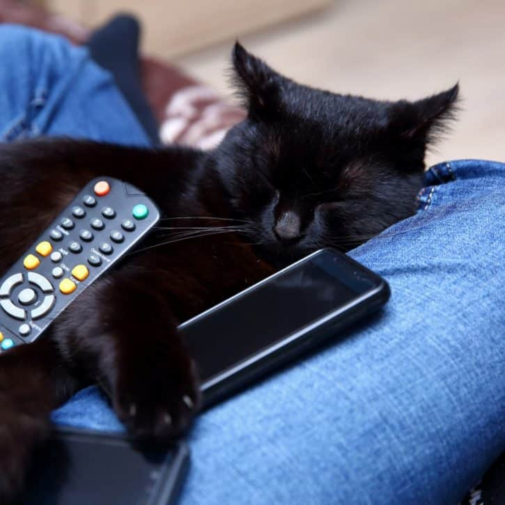 Black Cat With TV Remote