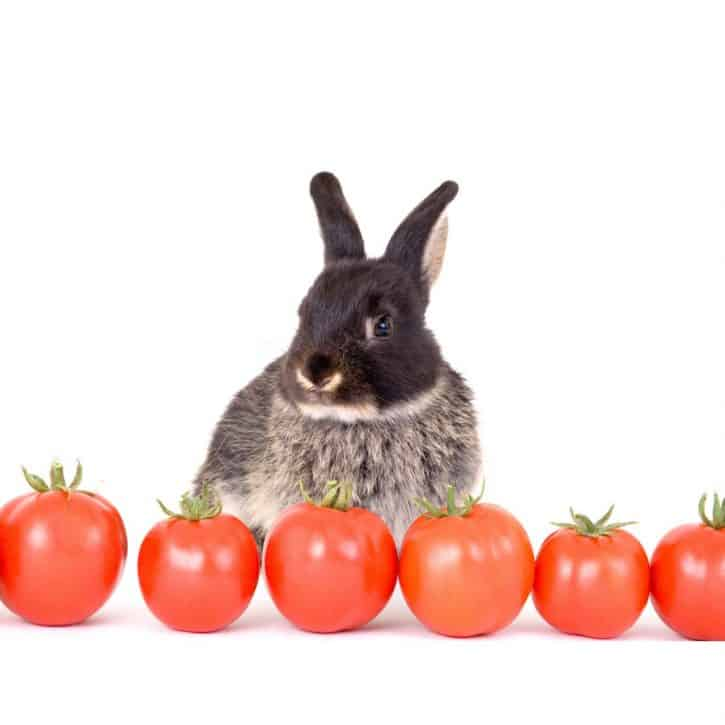 Can Rabbits Eat Tomatoes - Brown Rabbit With Tomatoes
