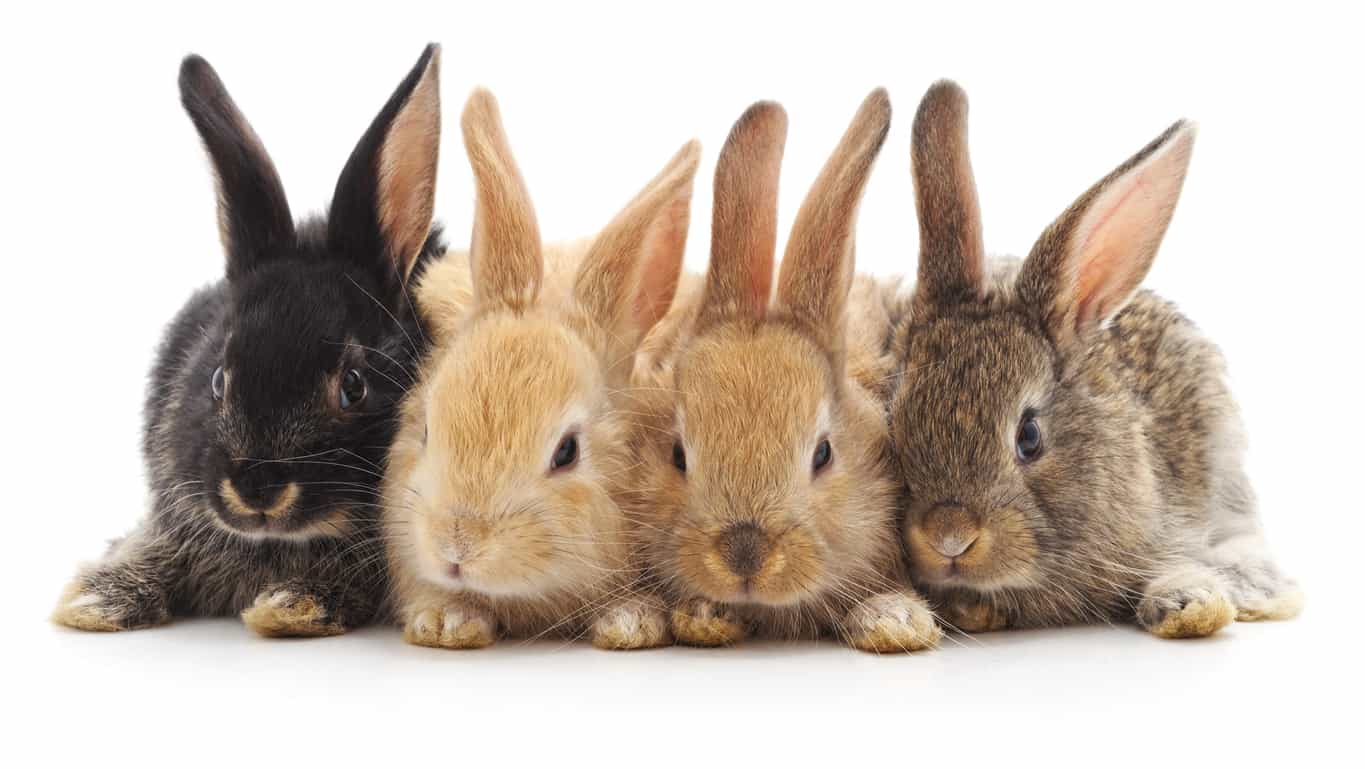 300 Bunny Names - The only list of rabbit names you'll need
