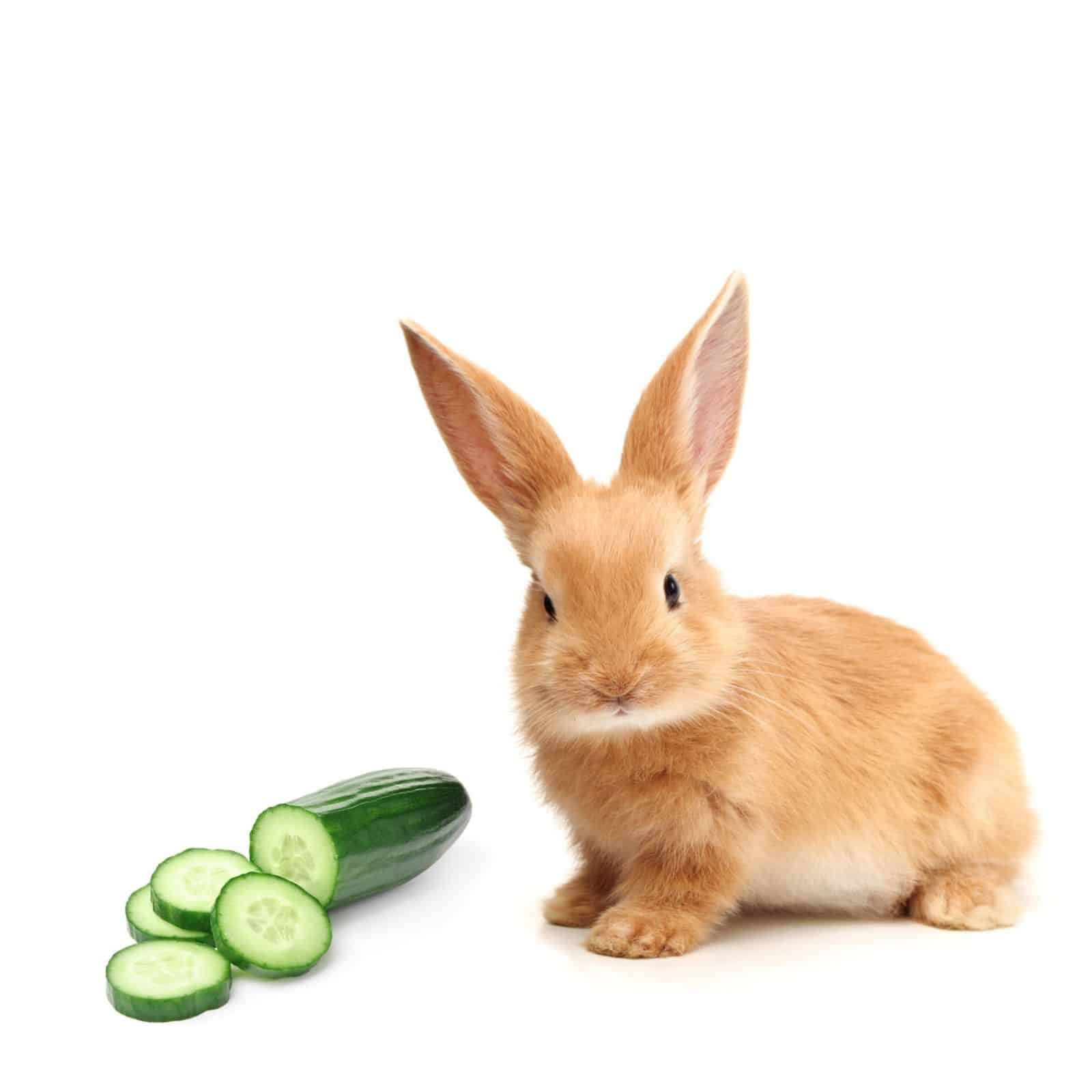 Can rabbits eat cucumbers
