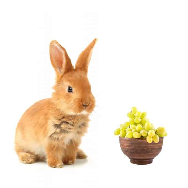 Can rabbits eat grapes?