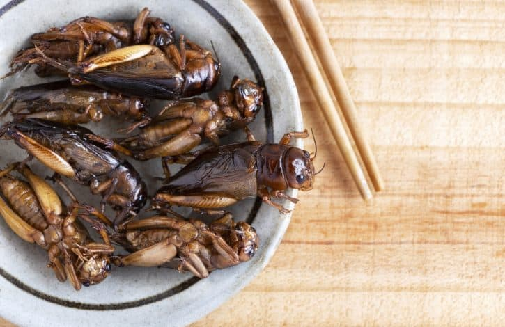 Cooked crickets in a bowl