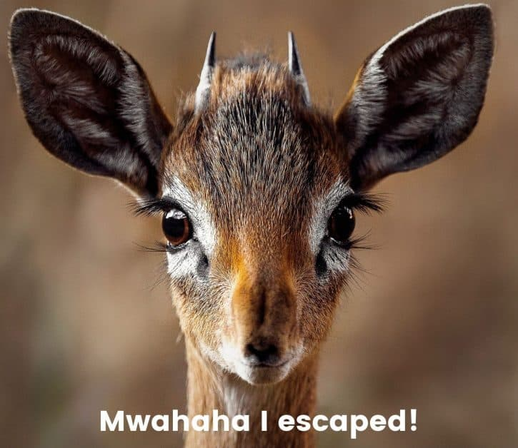 Mwahaha I escaped!