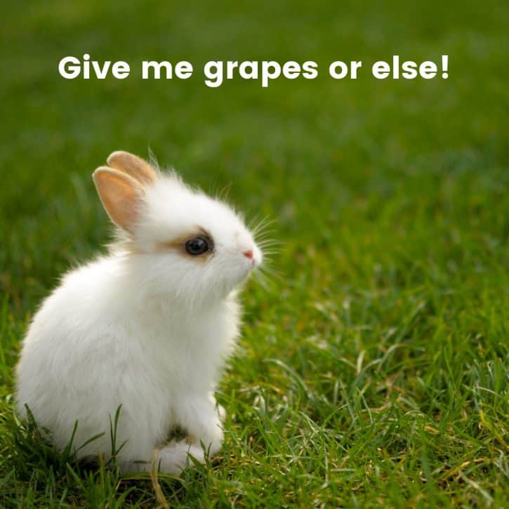 Give me grapes or else!