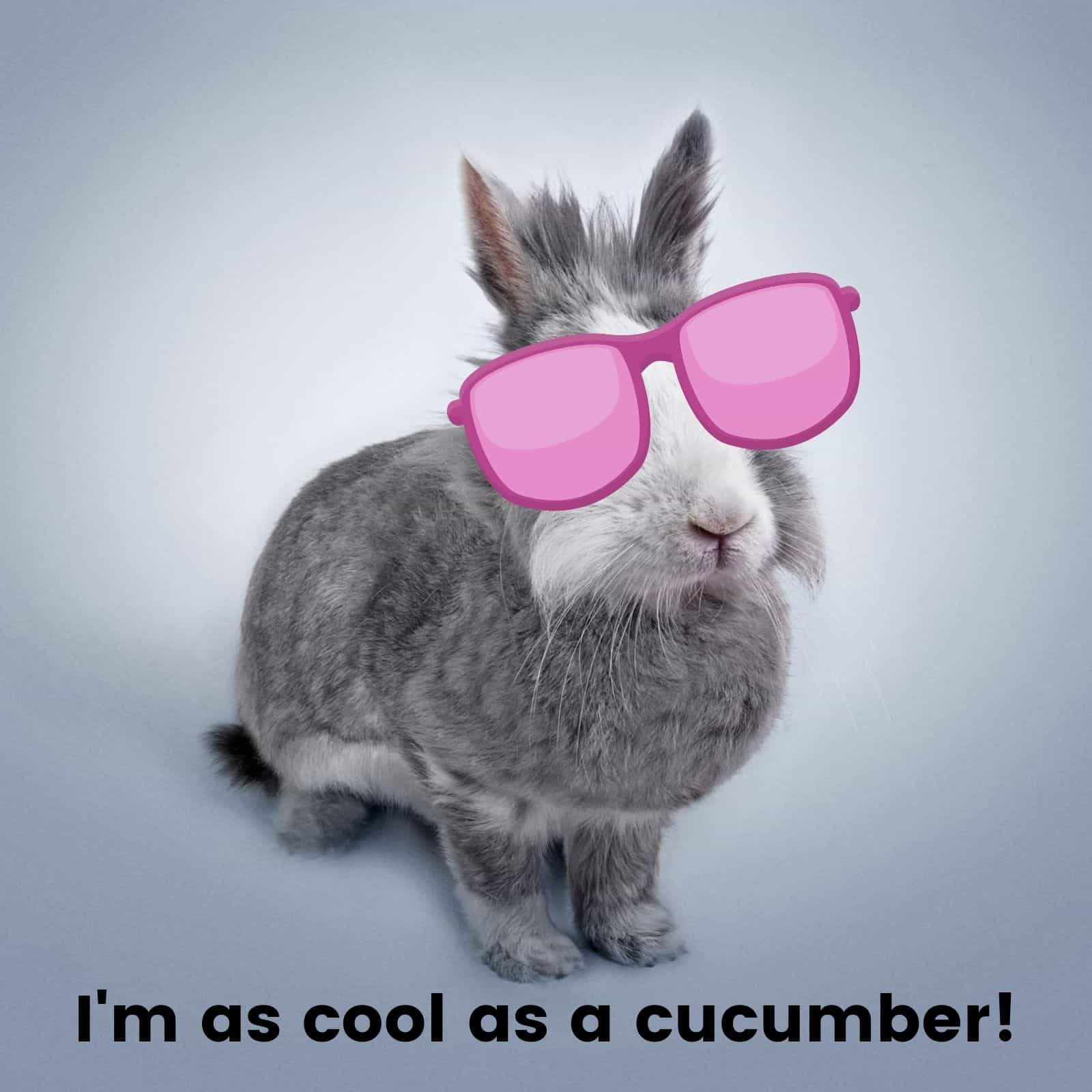 I'm as cool as a cucumber!