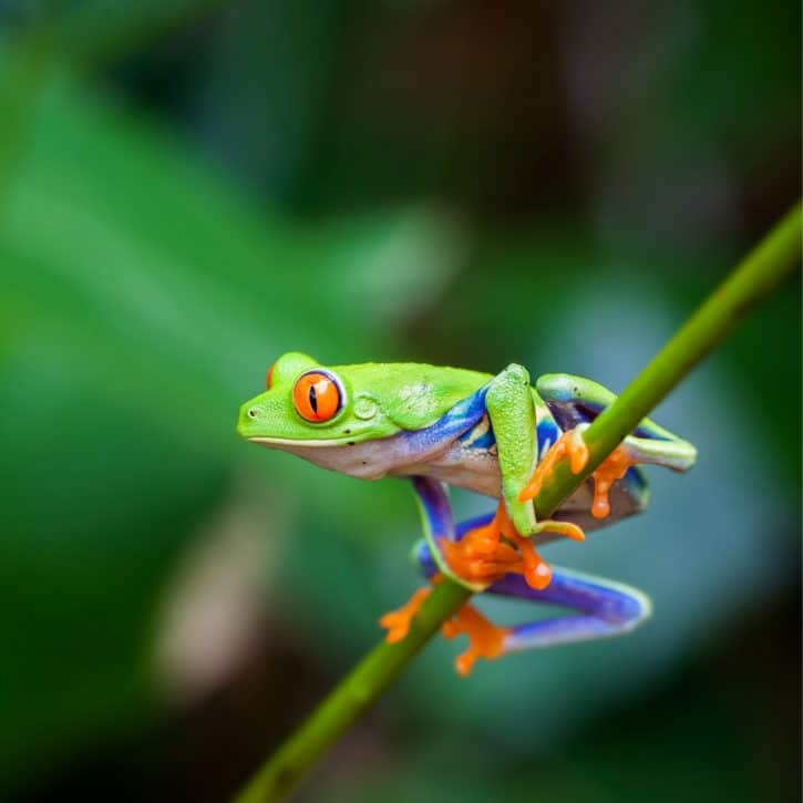 Frog names - Green frog on a stem