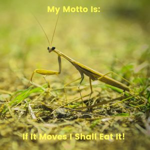 Green Praying Mantis With Phrase
