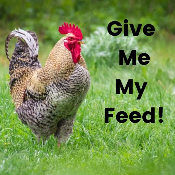 Give me my feed!