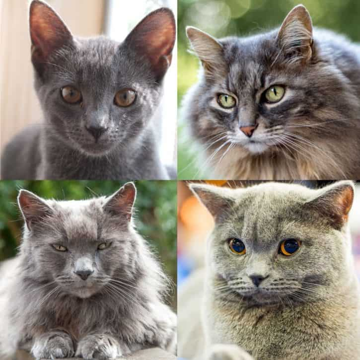 Shades of grey cats