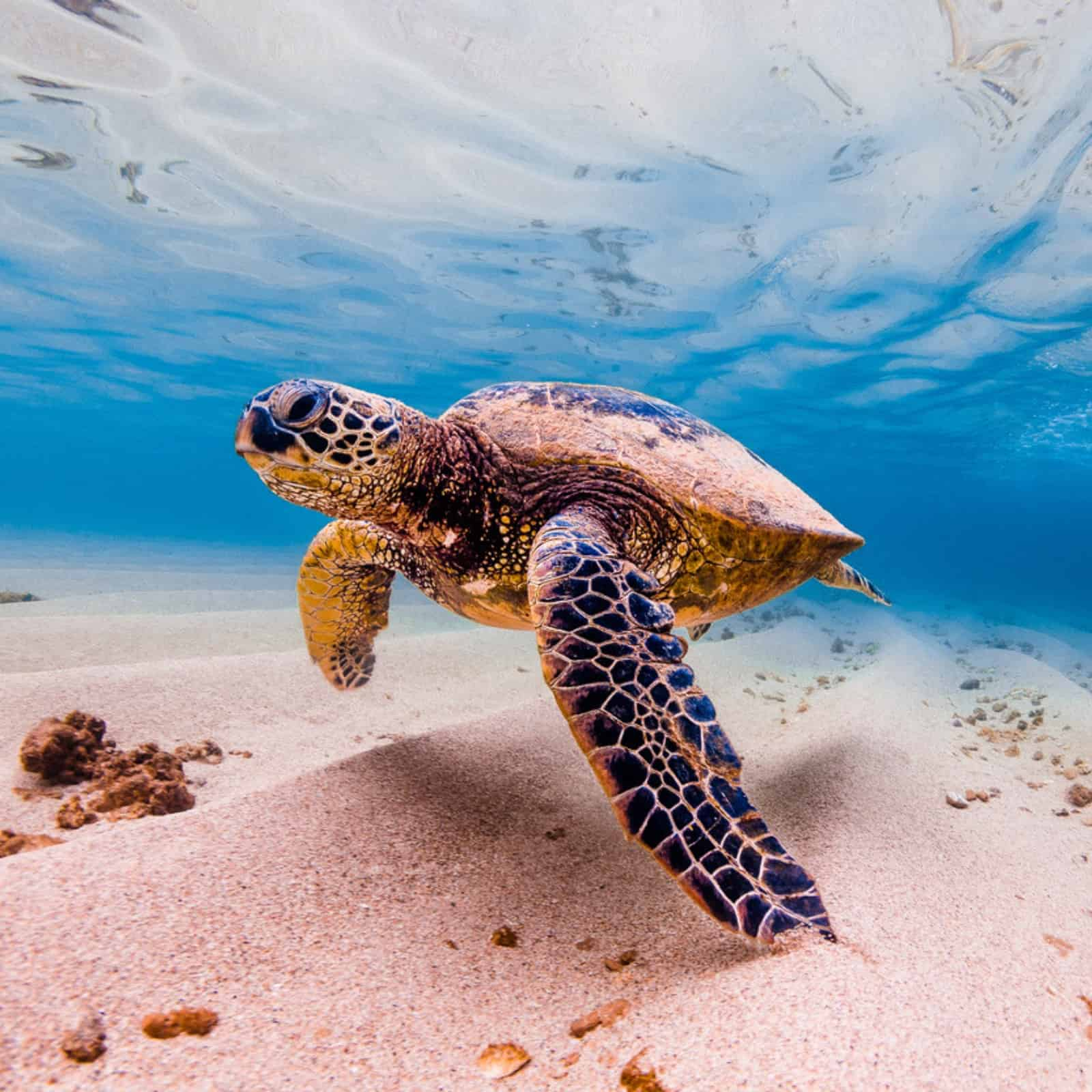 What Do Sea Turtles Eat We Ll Tell You What Each Type Of Sea Turtle Eats