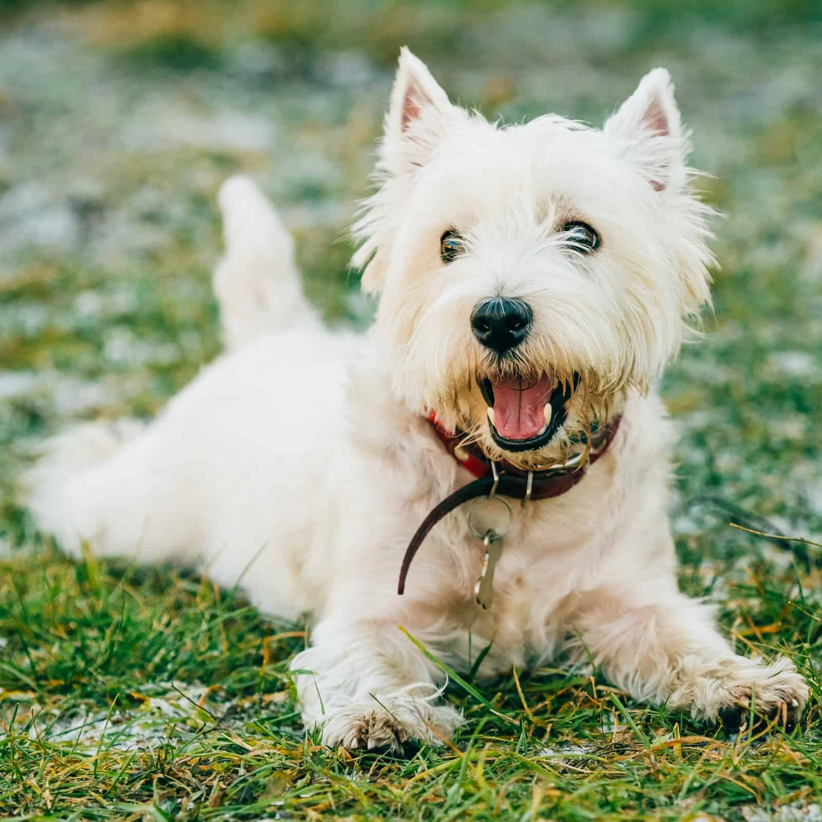 150 White Dog Names - Your one stop shop to find your pup's name