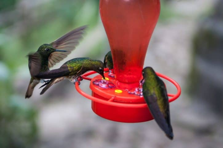 four green hummingbirds on red birdfeeder
