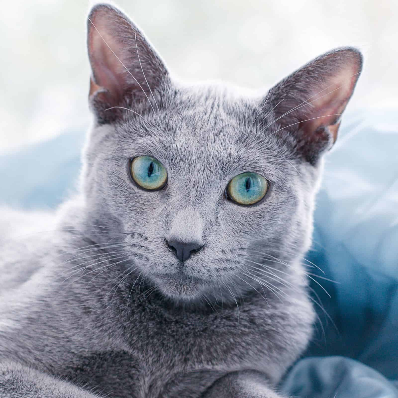 200 Grey Cat Names The Only List You Ll Need To Find The Perfect