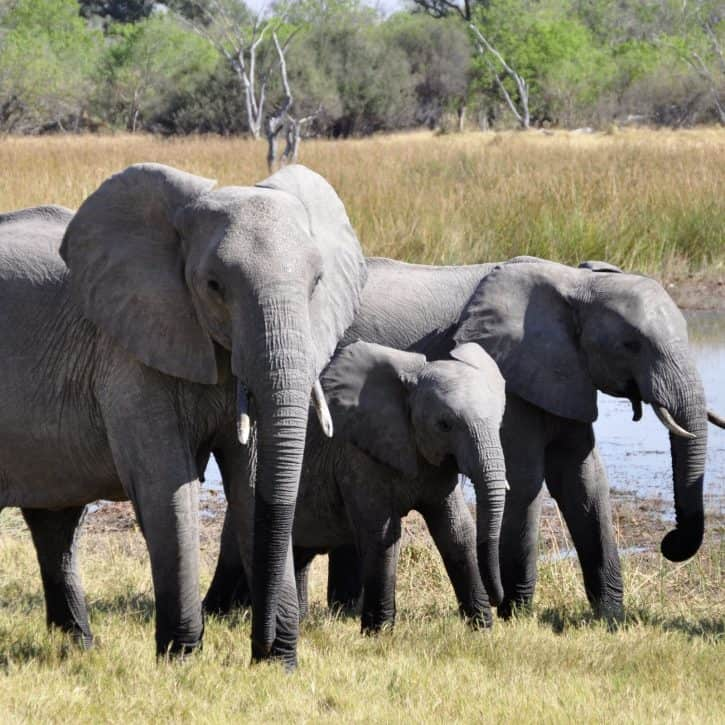 Gray cat names inspired by other animals like these elephants.